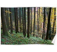 Autumn landscape in Valserine forest Poster