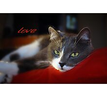 The Look of Love © Vicki Ferrari Photography Photographic Print