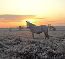 Frosty Morning in UK's New Forest by ChrisBalcombe
