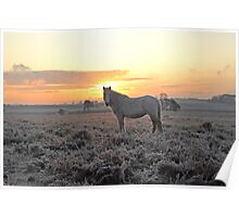 Frosty Morning in UK's New Forest Poster