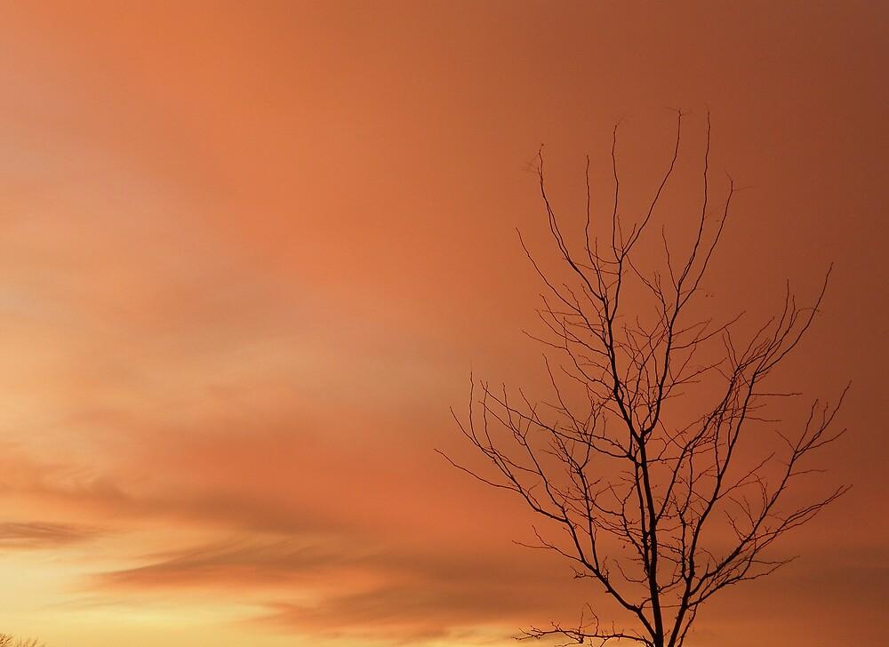 Tangerine sky by Cricket Jones