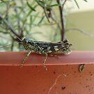 Ah Grasshopper by SpiritFox