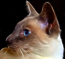 Fracto Cat by SharonD