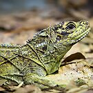 Lizard.....OK ! by diggle