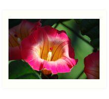 Bell Flower Art Print