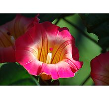 Bell Flower Photographic Print
