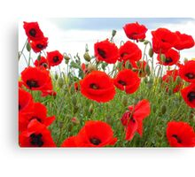 It's Poppy Season #2 Canvas Print