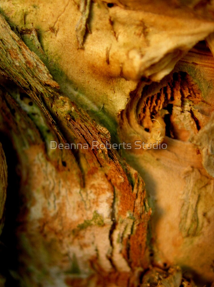 Paperbark Puzzle by Deanna Roberts Think in Pictures