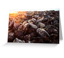 Shells of the sea Greeting Card