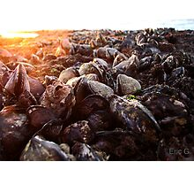 Shells of the sea Photographic Print