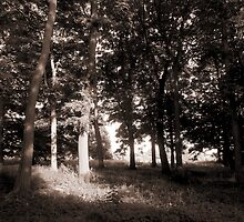 Woods at Bute Park, Cardiff, Wales. by Artberry
