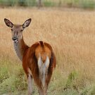 Doe A Deer - NZ by AndreaEL