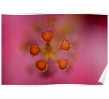 Extreme Hibiscus Macro Poster
