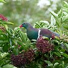 I Prefer The Elder Berries - Wood Pigeon - NZ by AndreaEL