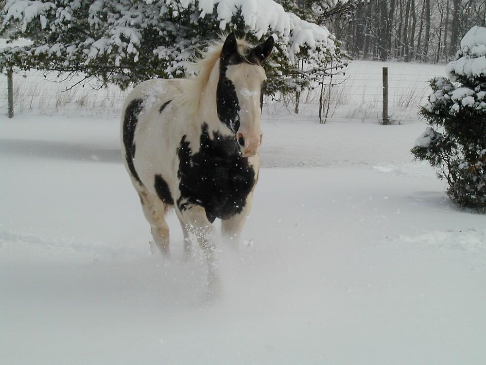 Dashing Through the Snow by Blackrock