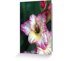 Flower of the Gladiators Greeting Card