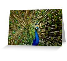 Peacock Eyes Greeting Card