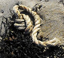 Washed Ashore by Rebecca Bryson