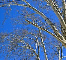 Under The Blue Unbrella Sky by pmarella