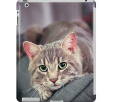 Curiosity killed the cat iPad Case/Skin
