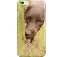 Damn silly place to hide a treat! iPhone Case/Skin