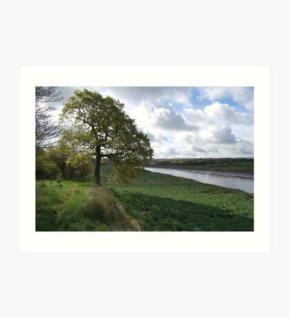 river and tree Art Print