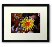 Martian Sunrise Framed Print