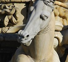 Horse Detail from Neptune Statue, Florence  by jojobob