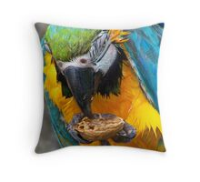 Macaw & the Walnut Throw Pillow