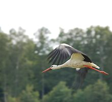 stork by MKCn