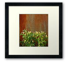 Chilli Plants Against Rusted Metal Door  Framed Print