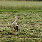 stork 2 by MKCn