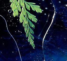 Iced Fern by JulieP