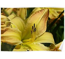 Gilded Lily Poster