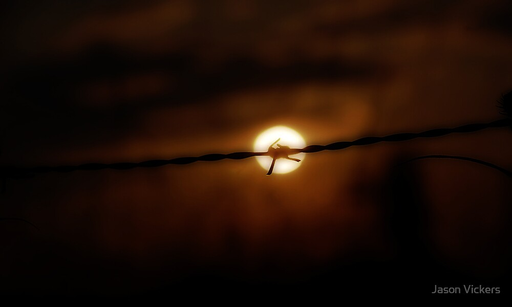 Barbed Sun by Jason Vickers