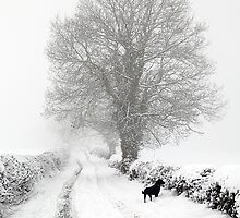 Winter Lane by Mick Gosling