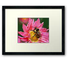 Bumble Bee On Fantasy Flower Framed Print