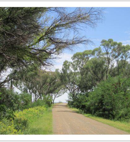 Road through the bush Sticker