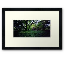 Pinhole Study: Shaded Gem by The Grand River Framed Print
