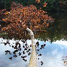 The Fallen Tree by SpiritFox