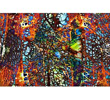ABSTRACT COLORED WEB Photographic Print