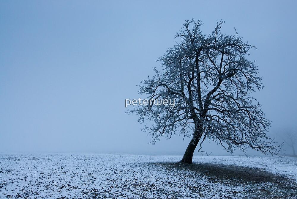 tree in winter by peterwey