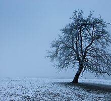 tree in winter by peterwey