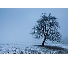 tree in winter Photographic Print