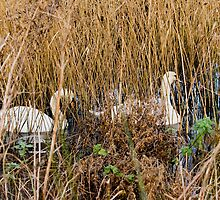 In the reeds by BizziLizzy