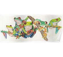 Red-Eyed Tree Frogs Poster