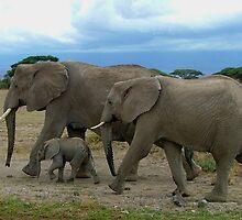 Amboseli Elephants by jardin