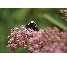Itty Bitty Bumble Bitty Photographic Print