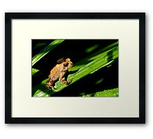 Kiss Me, You Fool!! Framed Print