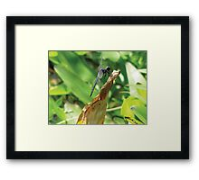 Beautiful Dragonfly Framed Print